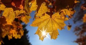 15 минути на слънце набавят витамин D