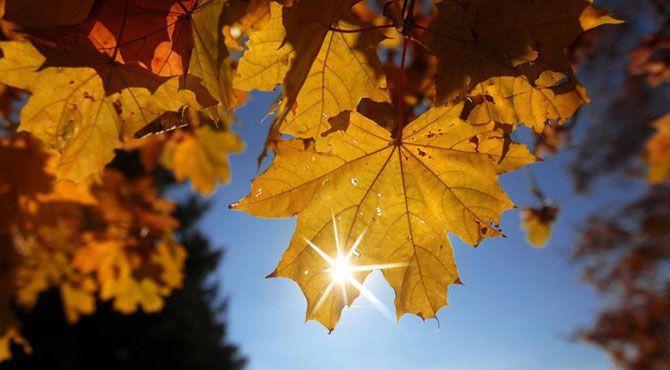 Photo of 15 минути на слънце набавят витамин D