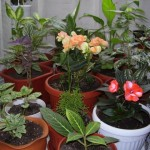 По цветята ще познаете емоционалното и физическо състояние на човека