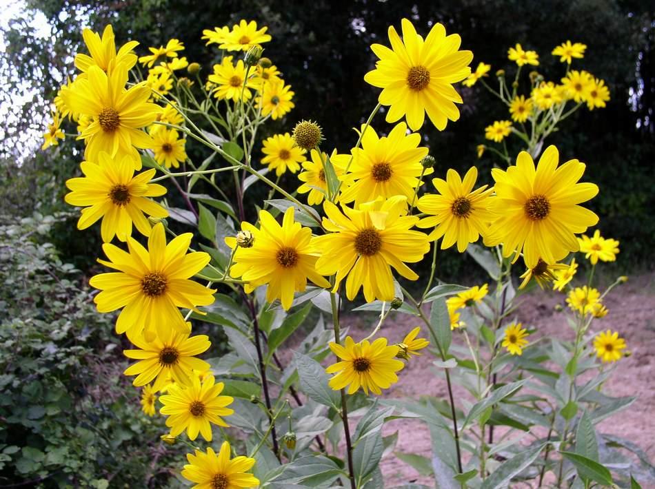 Photo of Гулията е обявена за растение на Европа през 2012-а