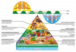 Хранителна пирамида.