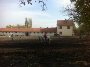 Конната езда е спорт, който развива и ума