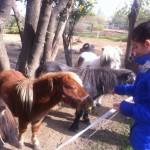 Конната езда – спортът, който лекува