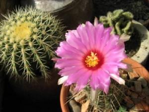 Всъщност кактусът символизира издръжливост, тъй като е растение, което наистина преодолява изпитанията на времето и природните стихии.
