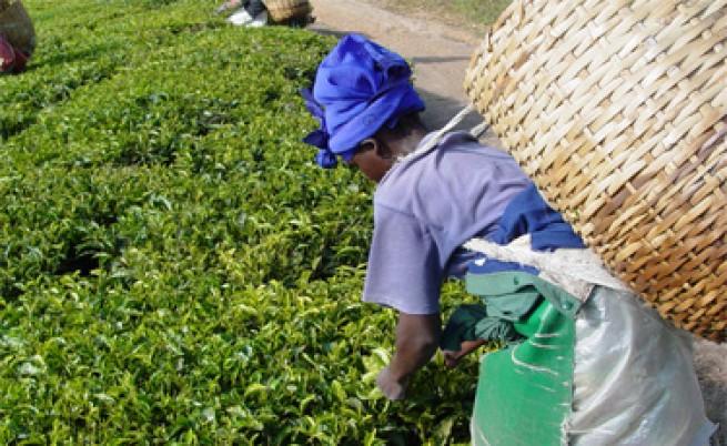 Photo of На 15 декември празнуваме Международния ден на чая