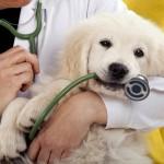Празник на ветеринарната медицина честваха в Русе