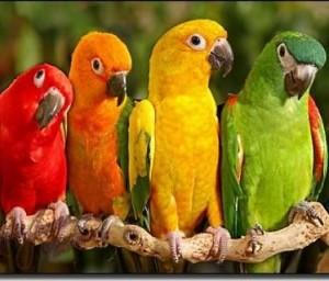 Ярките цветове ни даряват с добро настроение