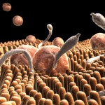 Три стъпки за прочистване от паразити