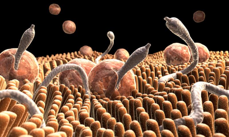 Photo of Три стъпки за прочистване от паразити