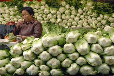 Photo of Китайското зеле е подходящо за отслабване