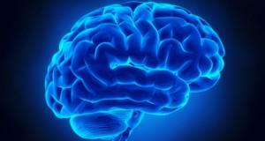 Връзката между нашия мозък и храненето