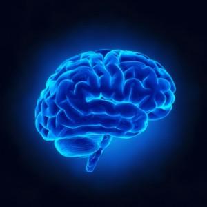 Има връзка между нашия мозък и храненето ни.