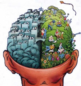 Откриха ген, който определя дебелината на мозъчната кора.