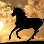 Победа, любов и топлина в Годината на Дървения кон