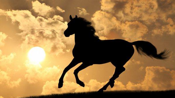 Photo of Победа, любов и топлина в Годината на Дървения кон