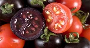 Създадоха ГМО тъмновиолетов домат с антиракови свойства