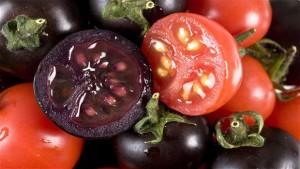 Британски учени създадоха генномодифициран тъмновиолетов домат с уникални свойства.