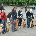 Кучета-водачи правят света достъпен за незрящите