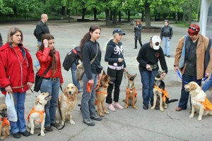 Кучета-водачи правят света достъпен за незрящите.