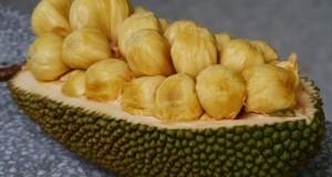 Джакфрут – най-големият плод, растящ на дърво
