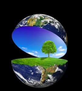 . Горската микрофлора може да съществува единствено в симбиоза с дърветата и храстите.