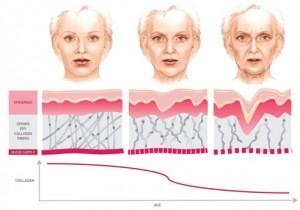 Колагенът можем да открием телешкия език и черния дроб.
