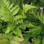 Растения пречистват въздуха и внасят уют