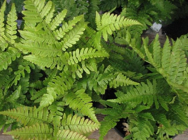 Photo of Растения пречистват въздуха и внасят уют