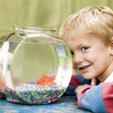 Или рибки?
