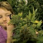 Епилепсията може да се лекува и с трева
