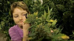Епилепсията може да се лекува медикаментозно, но марихуаната също е вариант.