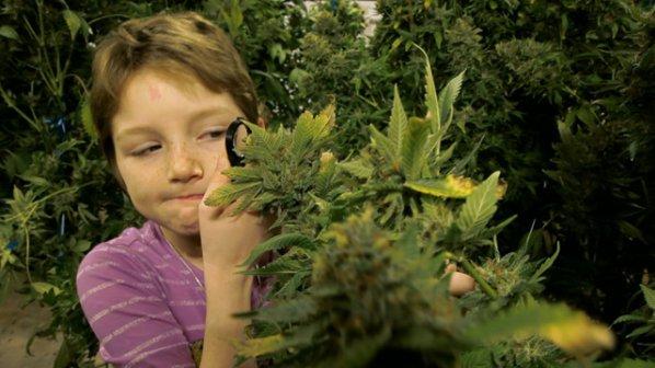 Photo of Епилепсията може да се лекува и с трева
