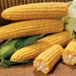 Пет мита за царевицата, които не знаете