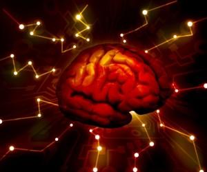 Изследователите твърдят, че хормоните на стреса в дългосрочен план са вредни за мозъка.