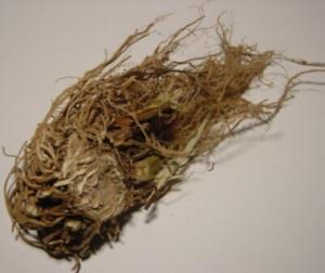 Можем да избегнем или облекчим симптомите на отдръпване като консумираме корен от валериана, лайка, пасифлора, жълт кантарион.