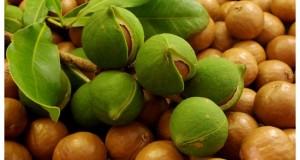Макадамия – полезна за здравето