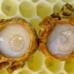 """Пчелно млечице – """"суперхраната"""" на пчелата-майка"""