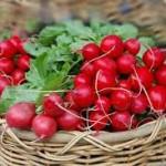 Червени репички в борбата със задържането на течности
