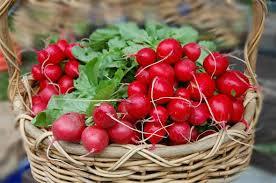 Ако искате нещо нискокалорично, но с високо съдържание на витамини, то несъмнено ще ви харесат малките червени репички.