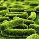 Пробиотици – могат да се използват срещу депресия
