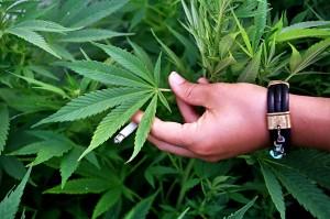 Майки искат узаконяване на медицинската марихуана в България
