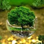"""""""ЕКО Образование за здравословна околна среда """" представиха в Русе"""