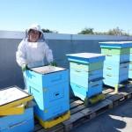2 милиона домашни любимци на покривите на HomeMax