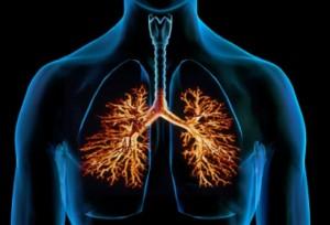 Световният ден за борба с хроничната обструктивна белодробна болест (ХОББ) 18 ноември, беше избран от Българското дружество за белодробни болести (БДББ) и Асоциацията на българите, боледуващи от астма, алергия и ХОББ (АББА), за да представят в кулоарите на Парламента Бялата книга на белодробното здраве.