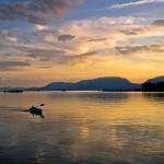 2 февруари е Световен ден на влажните зони