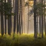 Пътуващ парник може да спаси горите