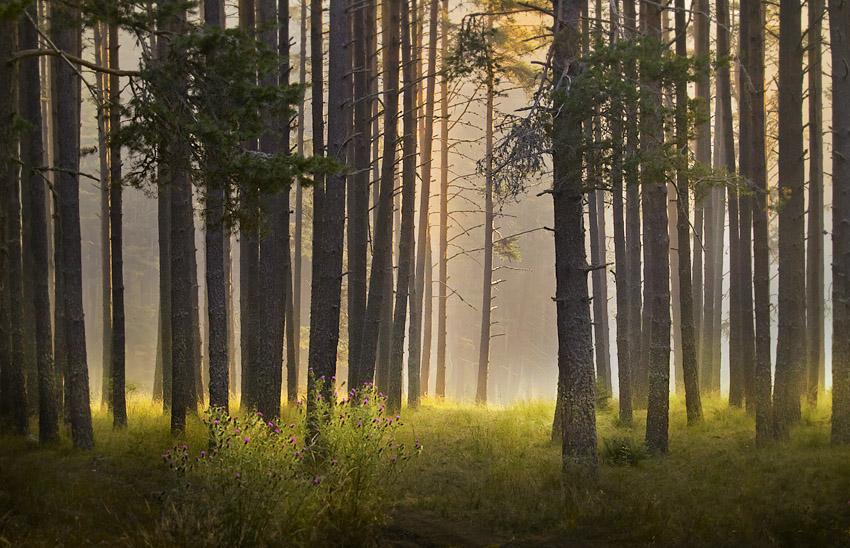 Photo of Пътуващ парник може да спаси горите