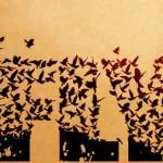 С 18 % са намалели птиците в земеделските земи за 10 години