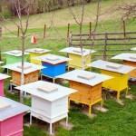 Пчели изпращат sms-и от кошера