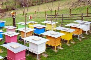 Пчелните кошери ще алармират пчеларите за проблеми